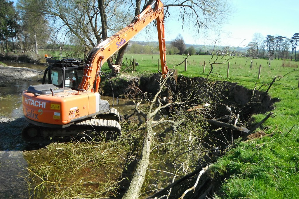 Placing felled branches