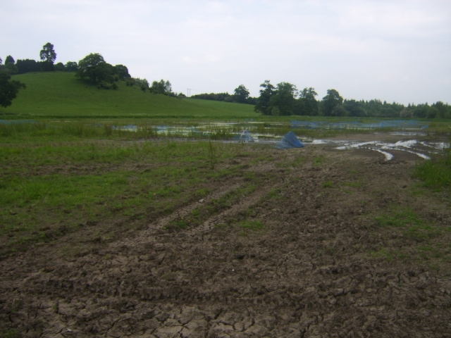 The reedbed after planting