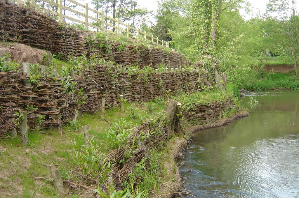 Live Willow Revetments Salix Products