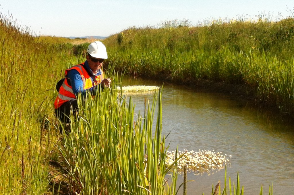 New ditches for water vole created using pre-established Coir Rolls and planting