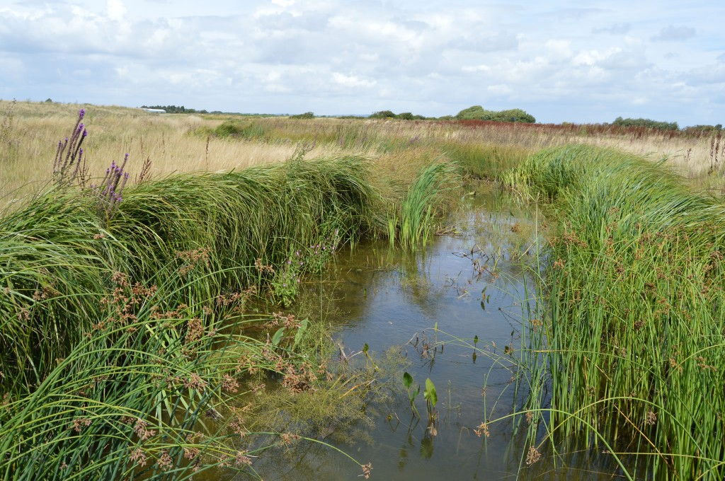 Coir Rolls after 18 months creating mature water vole habitat