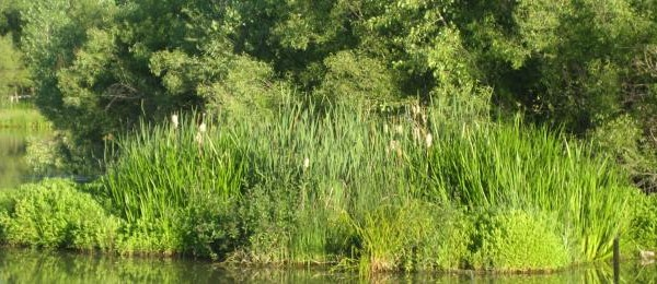 Biohaven floating wetlands support long term mature plant growth