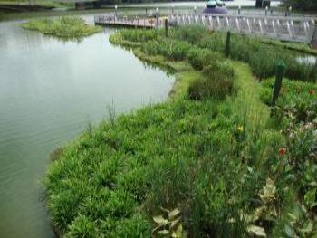 Biohaven islands can be cut to any shape and size and can support very mature planting