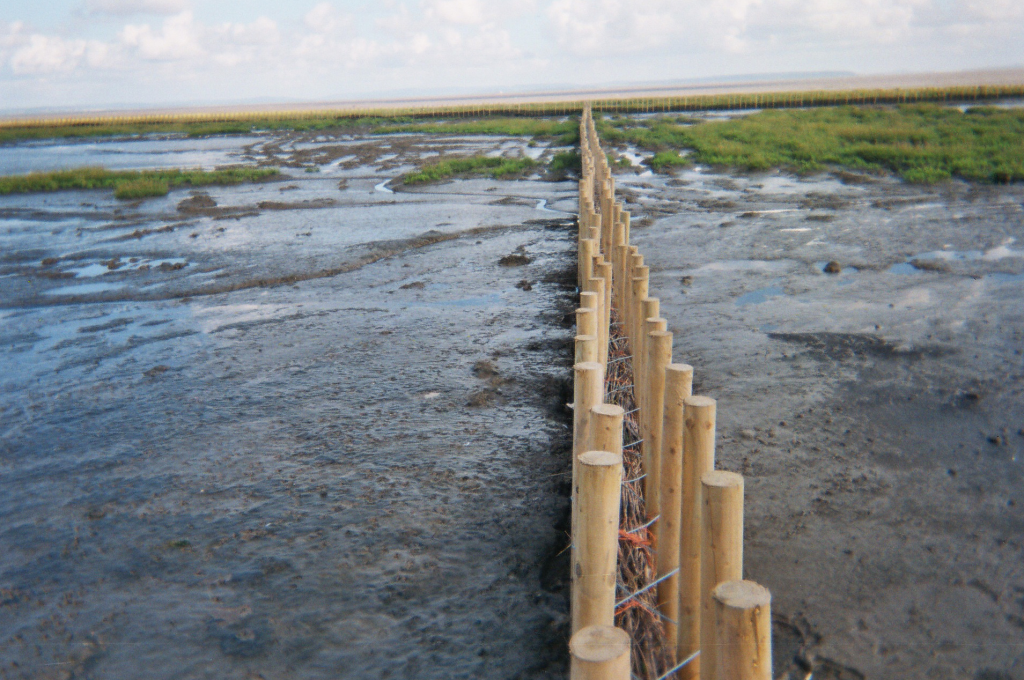 Brush Fascine Boxes are used 300 metres out into a salt marsh to encourage sedimentation, Rumney Marsh, South Wales, UK
