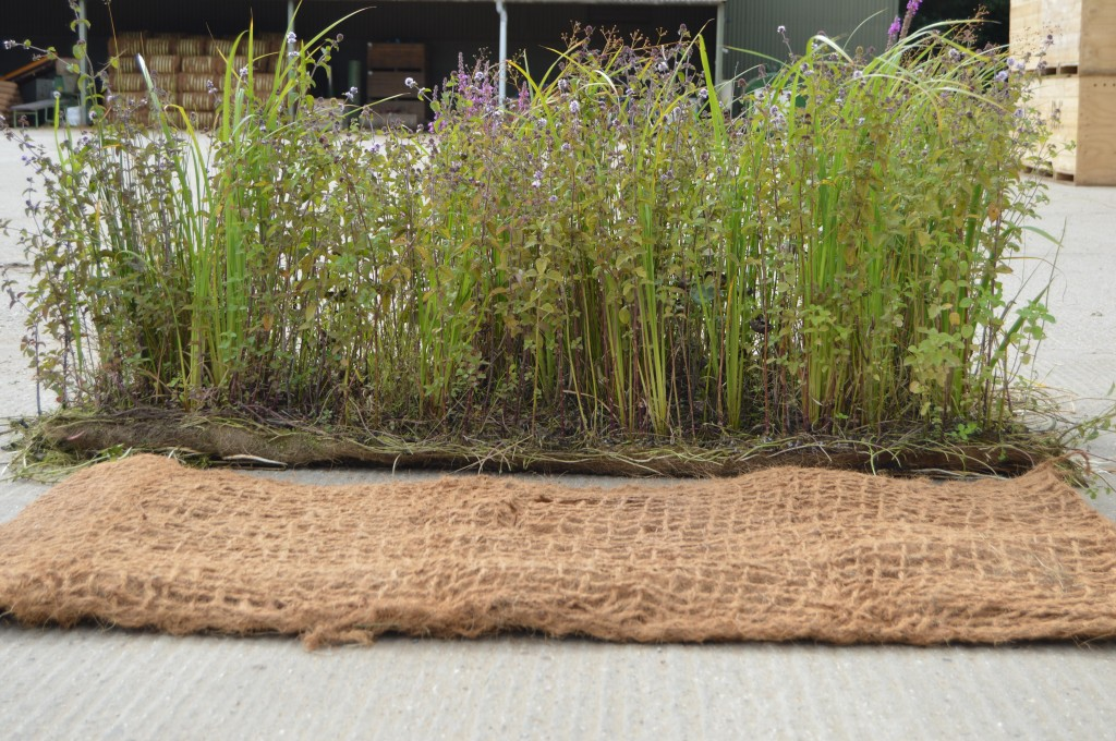 Establishing marginal vegetation as mature coir units can greatly increase the establishment success on bioengineering schemes