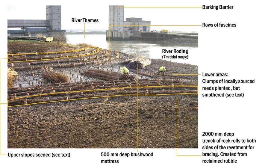 Key Features of the Roding Inter-Tidal Backwater
