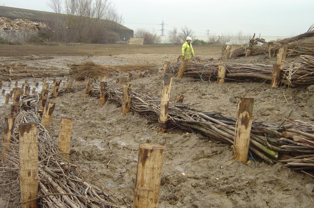 Lines of brushwood fascines are installed run parallel to the contours of the riverbank so that they intercept water and trap sediment. This is critical to enable vegetation to establish. Pre-established coir pallets can be placed in the gaps between the brushwood.