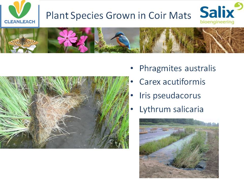 Plant species grown in coir mats