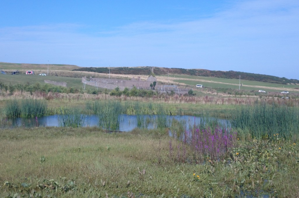 Native plants, reedbeds and pond at East Tullos Burn
