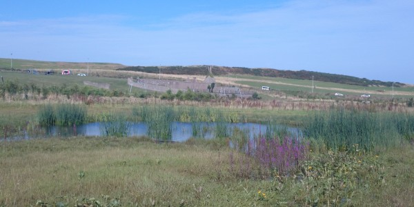 Native plants, reed beds and pond at East Tullos Burn