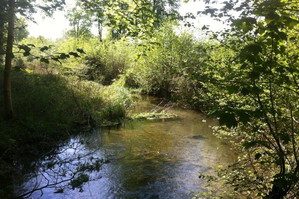 River Babingley May 2016