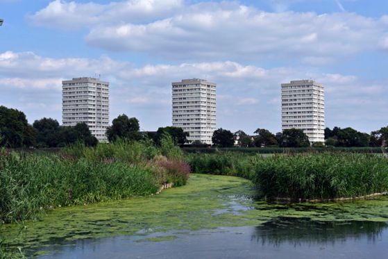 Reedbeds established at Woodberry