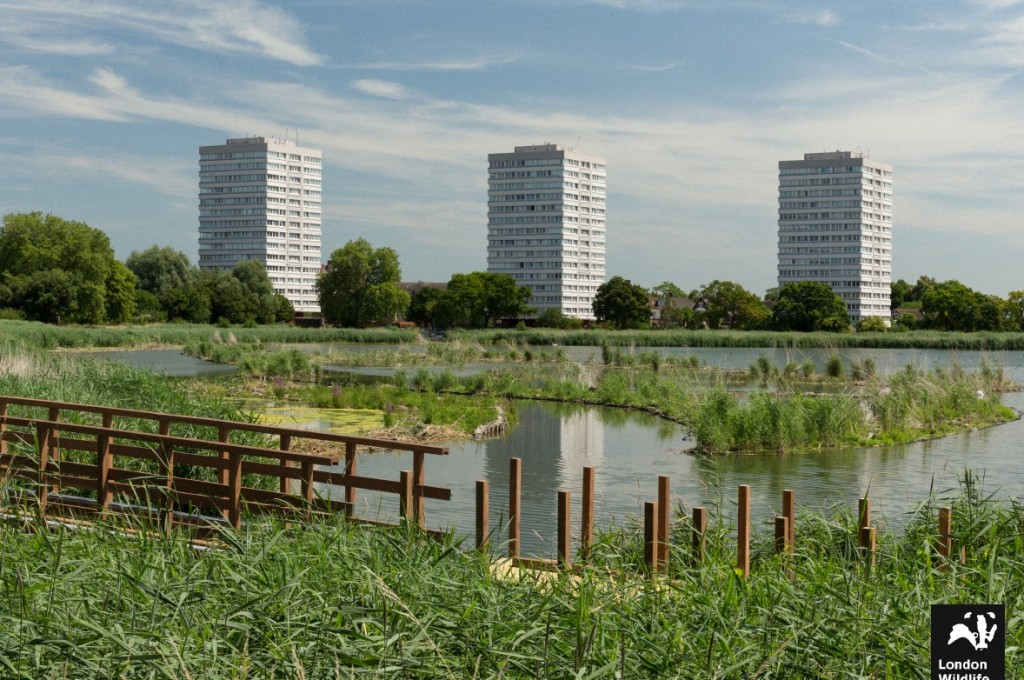 Woodberry reedbeds vegetating London Wildlife Trust