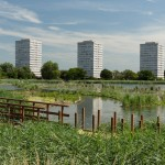 Woodberry reedbeds vegetating