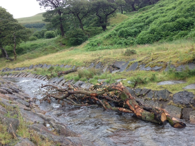 Large Woody Debris in stream at Cwmparc