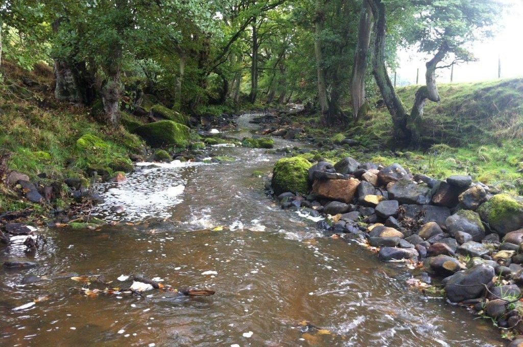 Improved flows in the river