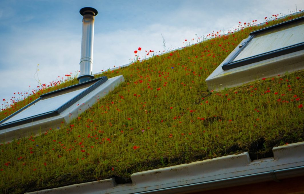 A perfect green roof covered in native wildflowers