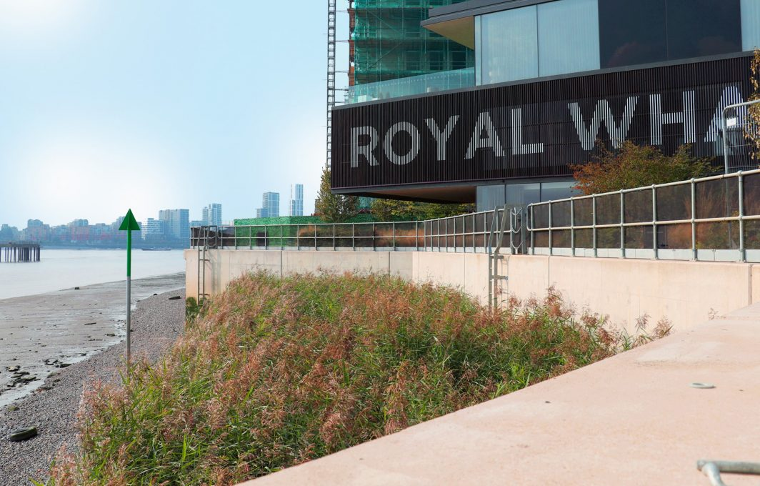 Royal Wharf intertidal reed bed solution - 2 years after installation