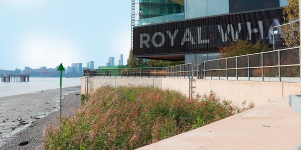 Royal Wharf intertidal reed bed solution