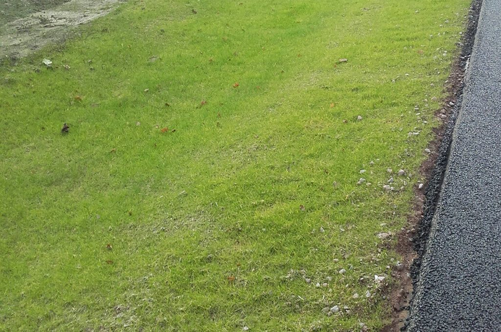 Vegetation growth by December 2017, five weeks after application of TerrAffix-Hydramulch Norwich Northern Distributor Road