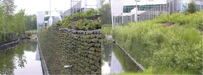 FlexMse vegetated retaining wall system before and after shot showing the vegetation